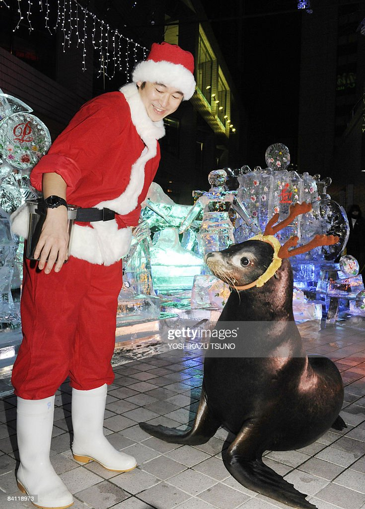 A 16-year-old sea lion wearing antlers performs with a Santa clad trainer Ryo Nonoyama (L) infront of Christmas decorated ice sculptures at an aquarium of Tokyo's Shinagawa Prince Hotel on December 23, 2008. AFP PHOTO / Yoshikazu TSUNO