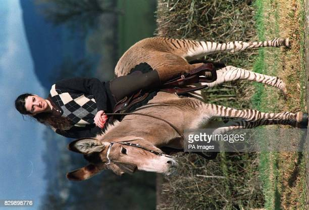 17yearold SuzyClare Alison on Zee on one of two of the only rideable driveable Zeebrass in the country The two Zeebrassmammoth donkey cross were...