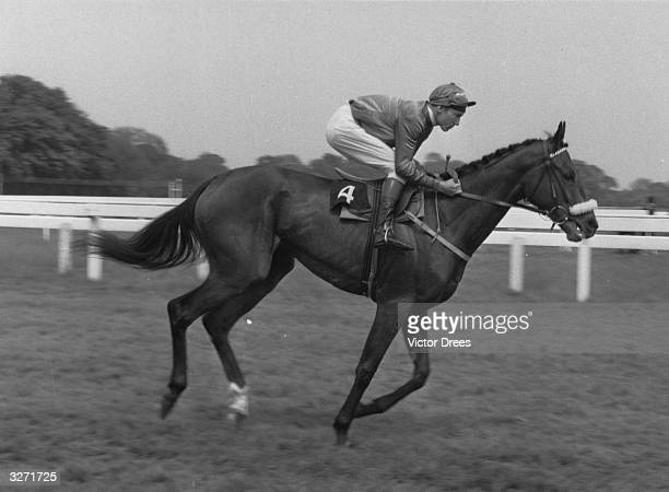 Lester Piggott the champion jockey seen here riding 'Fair Justice' at Kempton Park Race Course in 1964