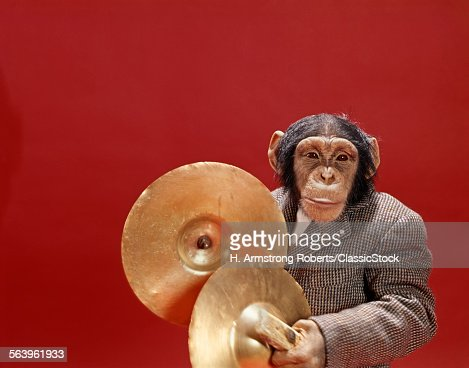 1960s CHIMPANZEE WEARING...