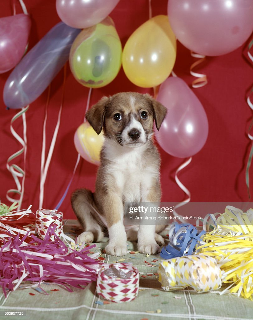 1960s DOG BALLOONS PARTY...