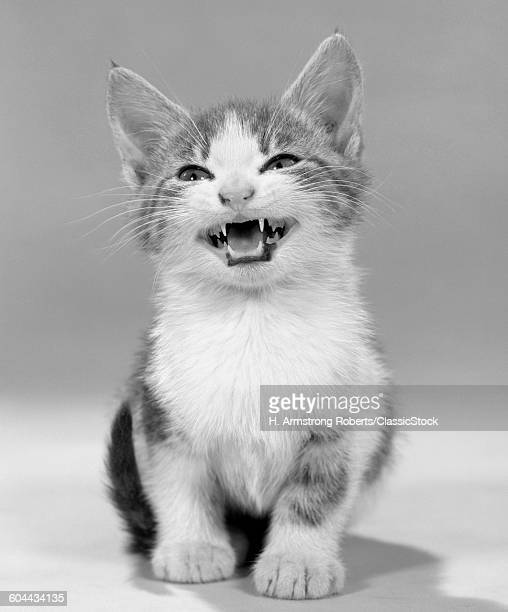 1960s MEOWING KITTEN TABBY.