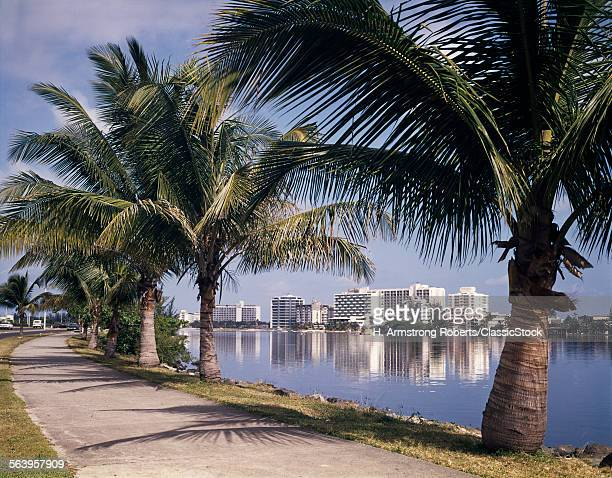 1960s PALM TREE LINED...