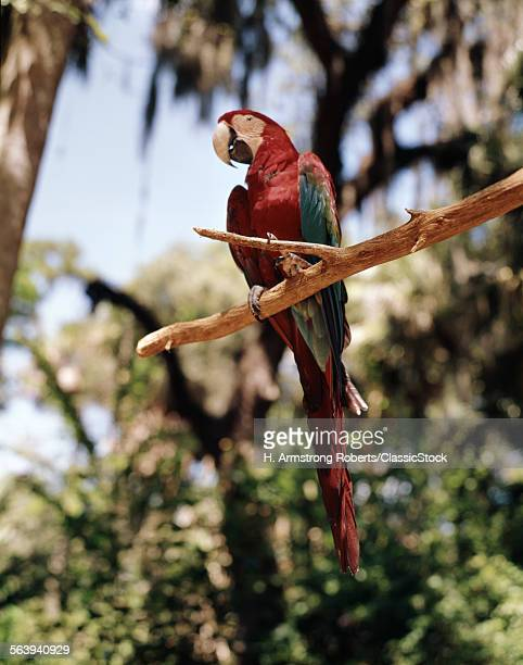 Florida 1960s Stock Photos And Pictures Getty Images