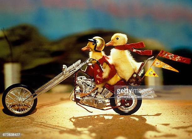 1990s TWO BABY DUCKLINGS...