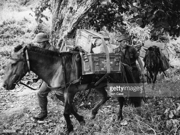 Lance Corporal John Worne of the Royal Veterinary Regiment and Private Lou KerrBell lead their Borneo ponies through the trees as part of the Jungle...