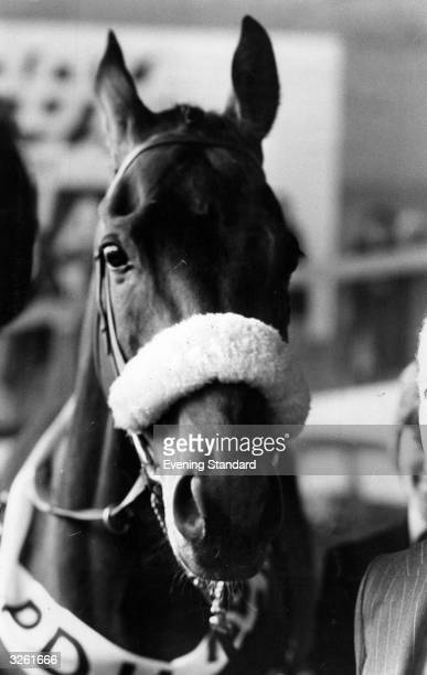 Red Rum the race horse