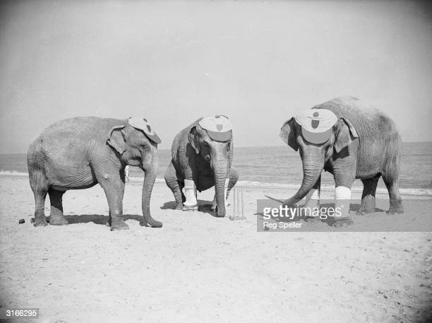 Three Powers elephants astound the holidaymakers at Skegness with a very professional game of cricket