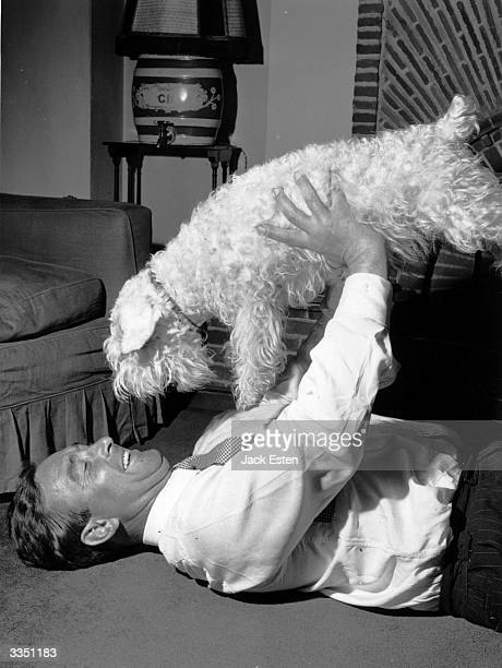 Arsenal football and English cricket player Denis Compton at home playing with his dog after an operation to remove his kneecap Original Publication...