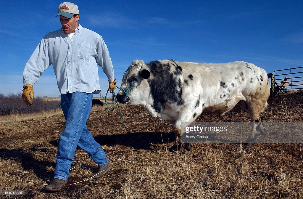Craig Phillips and his Belgian Blue Bull National Grand Champion 'Masquerade' 3yearsold on his ranch Phillips Pharms in Parker Saturday afternoon THE...