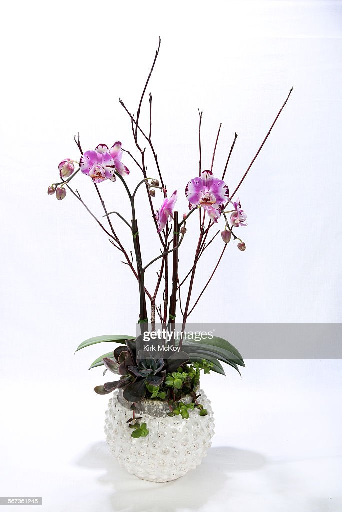LOS ANGELES CAJANUARY 29 2015Phalaenopsis with succulent plants in a contemporary whiteglazed pot $115 Cast stone dish garden with aloe succulents...