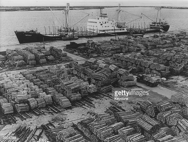 A mass of wood from Siberian forests which has been transported by floating or rail to the Russian Port of Arkhangelsk waiting to be exported abroad