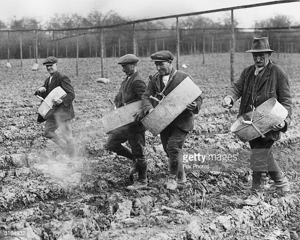 Farmers sprinkling chemical fertilizer by hand over a large hopfield near Hereford
