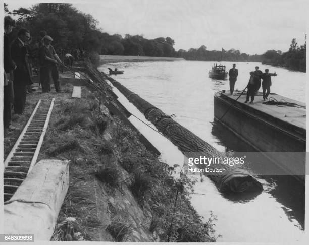 A 225ft Douglas fir from British Columbia to replace the flagpole at Kew Gardens was towed up the Thames from Surrey Commercial Docks to Kew where...