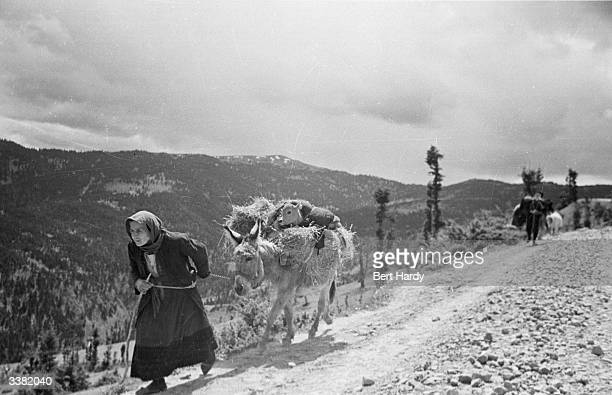 An old Greek woman takes her most precious possession a calf loads it onto her donkey and heads away from the battle zone during the Greek Civil War...