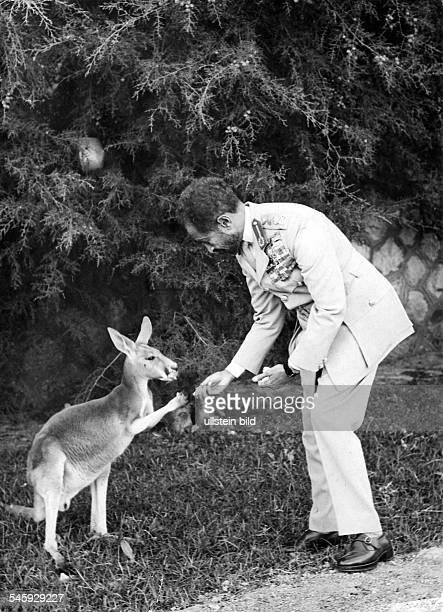 *23071892Ras Tafari MakkonenKaiser Äthiopien 19301974 füttert ein Känguruh in seinem Privatzoo an seinem 70 Geburtstag 1962