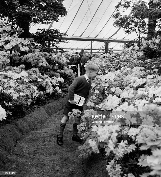 A youngster enjoys the flowers at The Chelsea Flower Show