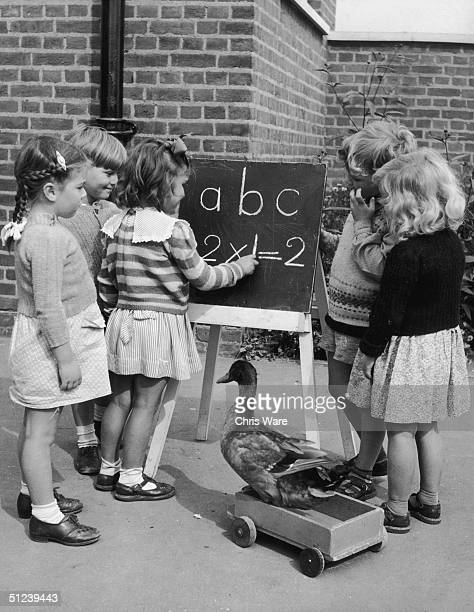 24th September 1952 Donald the Duck joins in the lessons at Grange Park School Hayes Middlesex He belongs to the Welfare Assistant Mrs Ethel Hurrell...