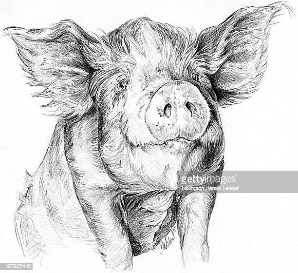 26p x 24p Camille Weber black and white illustration of a hairy pig