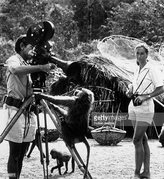Fulllength portrait of British zoologist Jane Goodall watching her photographer husband Baron Hugo Von Lawick adjust a camera to which a baboon is...