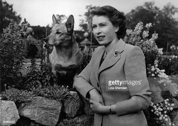 Queen of Great Britain Elizabeth II at Balmoral Castle with one of her Corgis