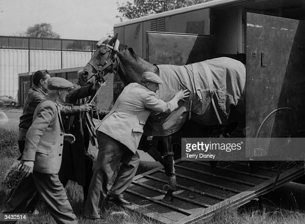 French racehorse and Derby contender Thymus being put in a horsebox after its arrival at Gatwick Airport