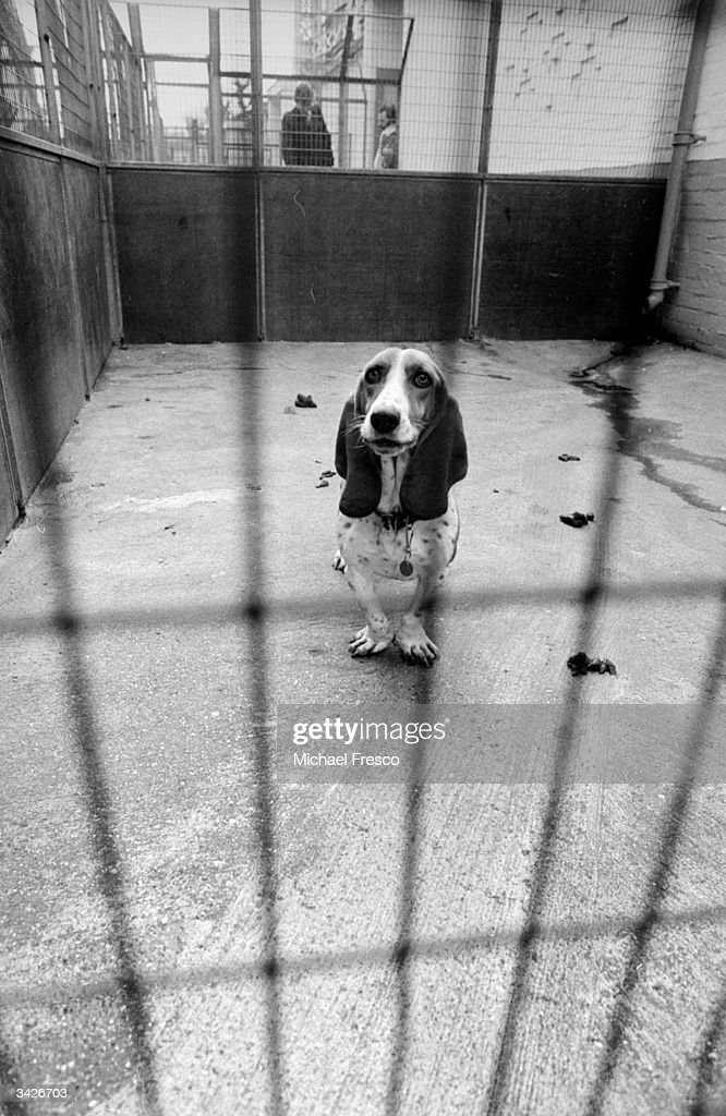 A stray dog in an enclosure at Battersea Dogs Home, south London, an image used in a pre-Christmas appeal to find owners for hundreds of strays.