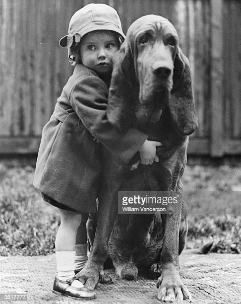 Champion bloodhound Leo of Reynalton being cuddled by Dorothy Horder at the Crufts Dog Show Leo has won Crufts six times