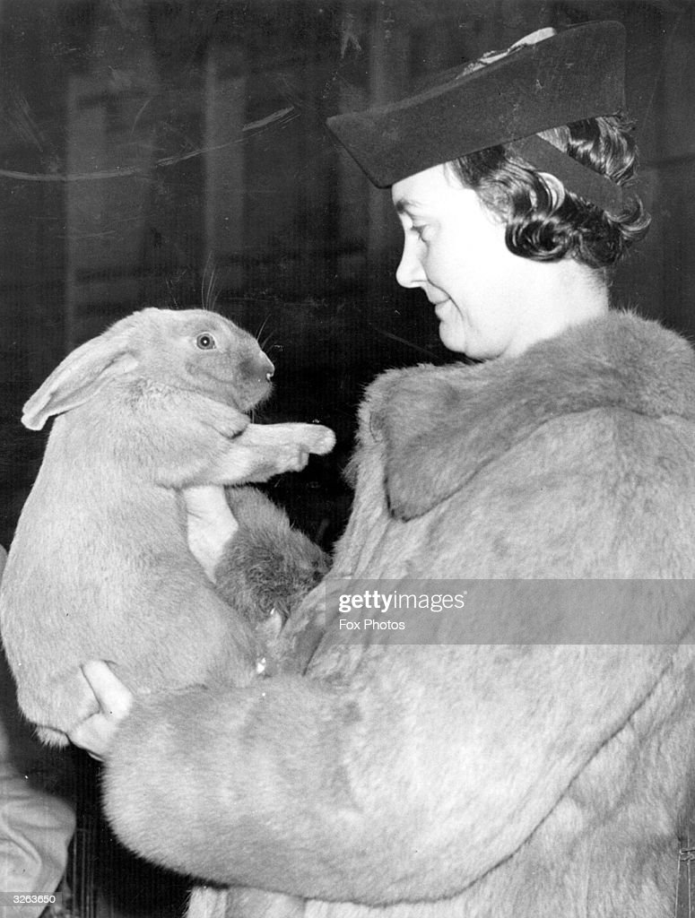 At the War Time Rabbit Show, at the Bethnal Green Men's Institute, where demonstrations of back yard rabbit keeping for meat production, wool and furs took place, this particular rabbit, a Blue Beveran, is probably wondering if its owner is wearing its mother and the rest of its family, as the coat is made from the same fur.