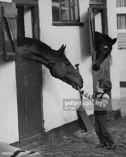 The son of the racehorse trainer Donald McCain feeding carrots to Red Rum at stables in Southport