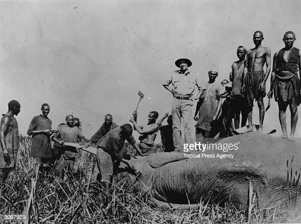 A hunting party chopping the tusks off an elephant while others are standing on the giant corpse Original Artwork Photograph displayed at the 1933...