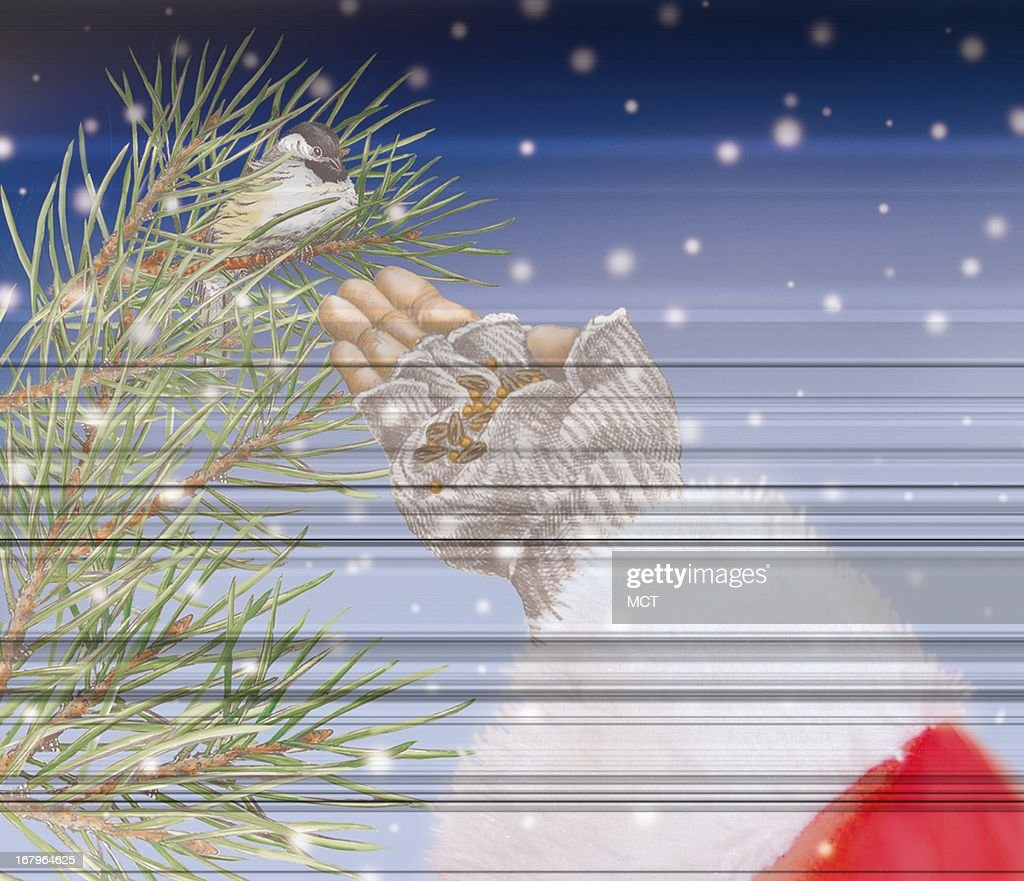 39p x 34p Lee Hulteng color illustration of Santa offering seeds to a chickadee in a spruce tree.