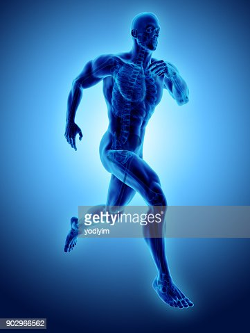 3d illustration male running pose with x-ray skeleton joint, medical concept. : Stock Photo