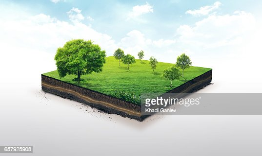 3d illustration of a soil slice, green meadow with trees isolated on white : Stock Photo