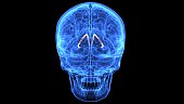 The human brain is the central organ of the human nervous system, and with the spinal cord makes up the central nervous system. The brain consists of the cerebrum, the brainstem and the cerebellum.