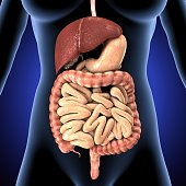 The human digestive system consists of the gastrointestinal tract plus the accessory organs of digestion .