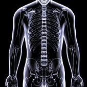 The human skeleton is the internal framework of the body. It is composed of around 270 bones at birth – this total decreases to around 206 bones by adulthood after some bones get fused together