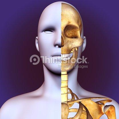 3d Illustration Of Human Body Skull Anatomy Stock Photo