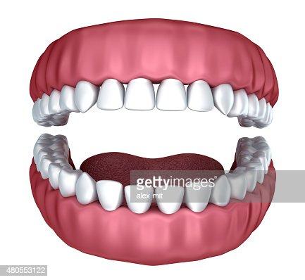 3 d abierto de dentaduras Aislado en blanco : Foto de stock