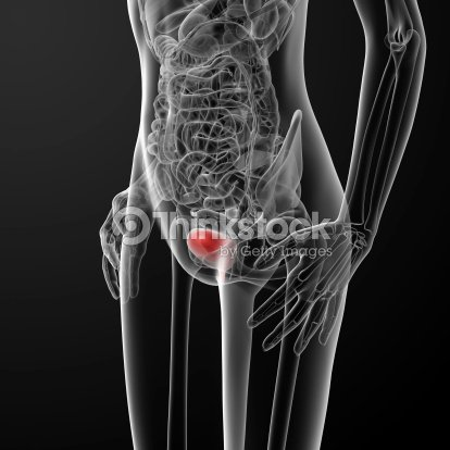 3d Render Female Bladder Anatomy Xray Stock Photo Thinkstock