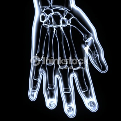 3d Rendered Anatomy Illustration Of A Human Skeletal Hand Stock