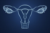 3d rendered illustration of an x-ray of the uterus on a blue background.