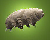 3d rendered realistic illustration of the tardigrade.