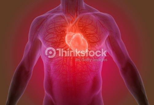 3d Darstellung Der Anatomie Des Menschlichen Herzens Stock-Foto ...
