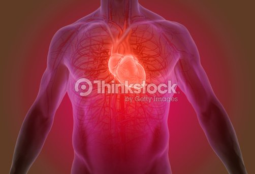 3d Rendering Of The Human Heart Anatomy Stock Photo Thinkstock