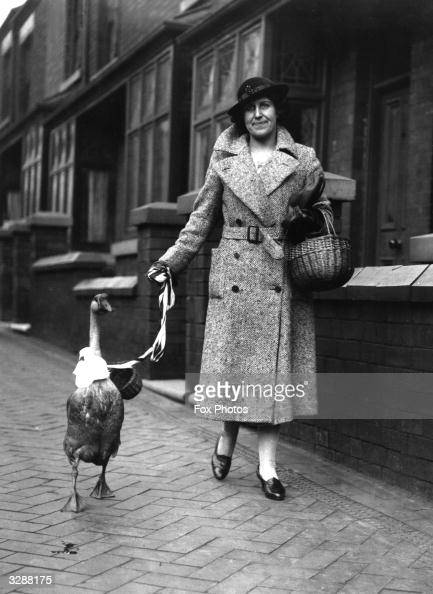 Mrs Lockyer from StokeonTrent takes her pet goose out shopping The bird has been taught to accept pennies and has collected a large sum for charity