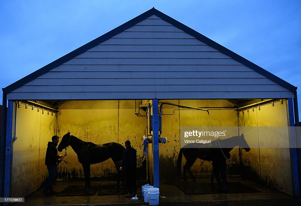 3yr old Gregers (L) and Spacecraft from the David Hayes stable are washed down after a Flemington trackwork session at Flemington Racecourse on August 23, 2013 in Melbourne, Australia.