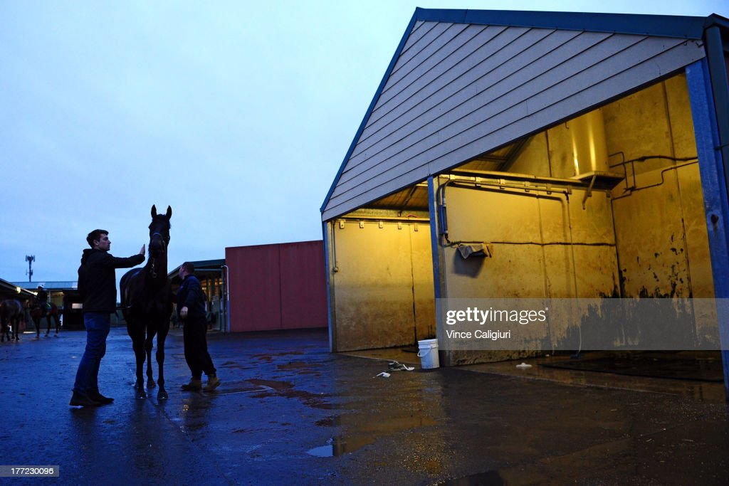 3yr old Gregers from the David Hayes stable is washed down after a Flemington trackwork session at Flemington Racecourse on August 23, 2013 in Melbourne, Australia.