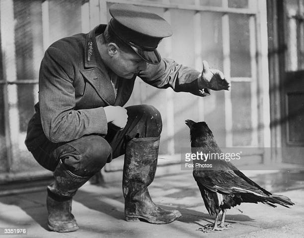 A keeper at London Zoo training a raven to talk