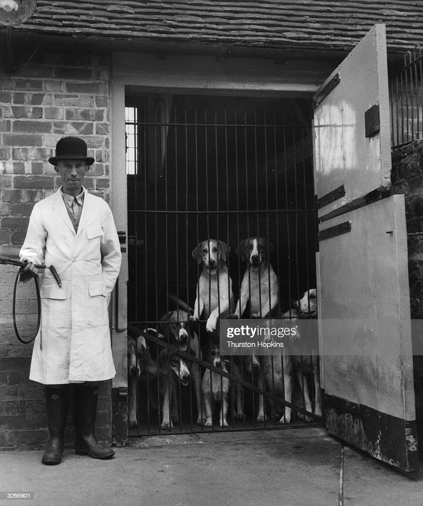 Foxhounds peer out from behind bars at Cowdray Park. Picture Post - 7267 - Sporting Paradise - pub. 1954